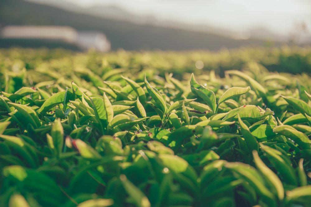 agriculture-blur-close-up-911804